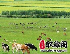 绿色畜牧养殖技术