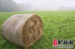 乔木林间种茶生态与经济效益