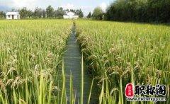 水产养殖污染控制策略